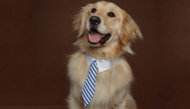 Dog Business Tie