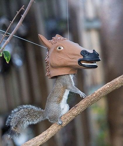 Horse Head Squirrel Feeder