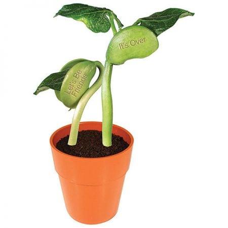 Breakup Bean Plant