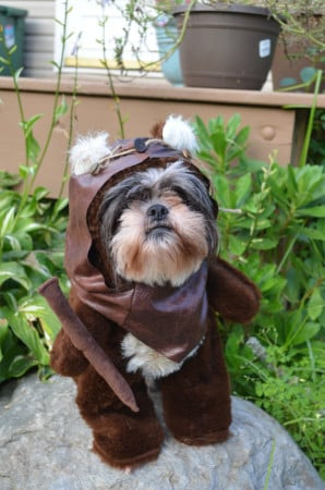Dog Ewok Costume