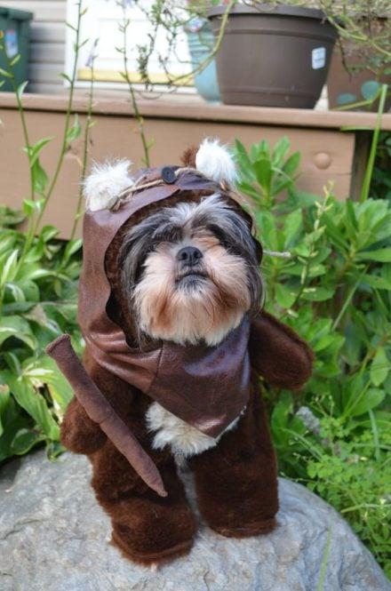 Dog Ewok Costume