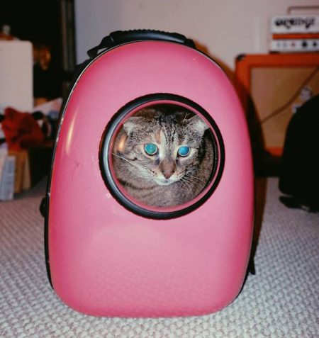 Bubble Backpack Cat Transporter