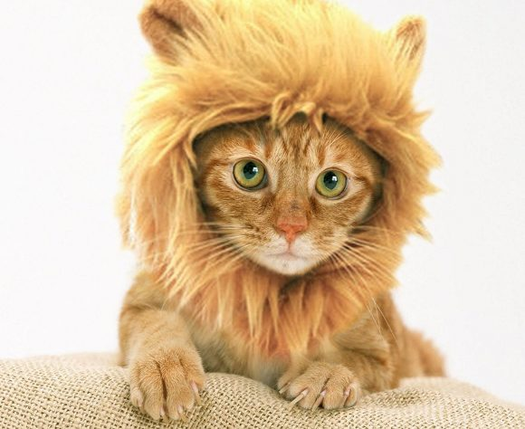 Lion Cat Hat