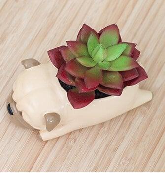 Pug Planter