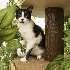 Indoor Cat Tree House