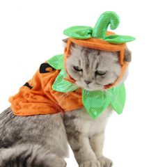 Cat Pumpkin Hat