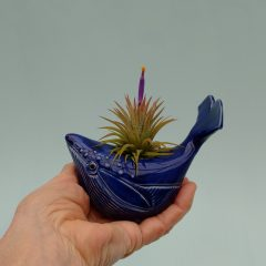 Small Whale Air Plant Holder