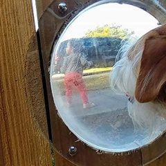 Dog Fence Window